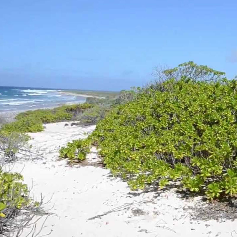 White Sand at Kiritimati Island