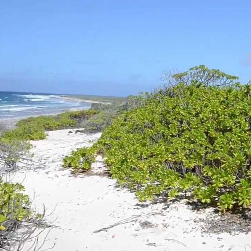 White Sand at Kiritimati Island